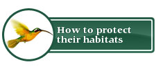 How to protect their habitats